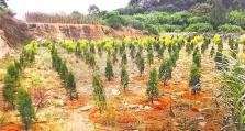 福州仓山多部门联合执法 被毁林地已复耕补植
